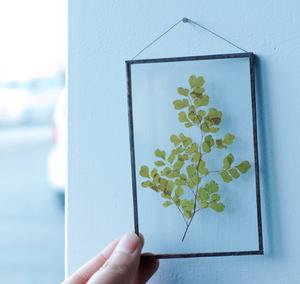 植物絵画:プリザーブドフラワー『アジアンタム・ルーシー』