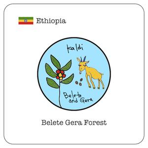 エチオピア ベレテ・ゲラ / 100g