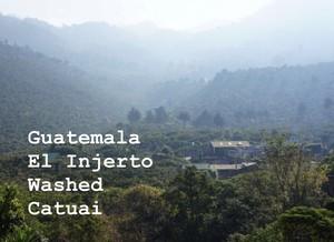 『500g』 Guatemala El injerto washed 浅煎り