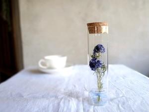 【受注生産】植物標本 Botanical Collection■ スリムボトル ■ ギリア レプタンサ