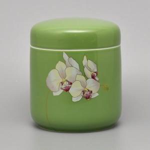 グリーン胡蝶蘭 筒型 5寸