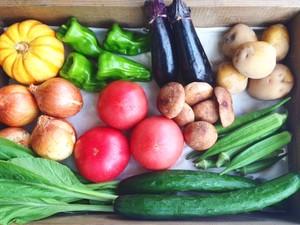 旬の野菜SET(7~8種)