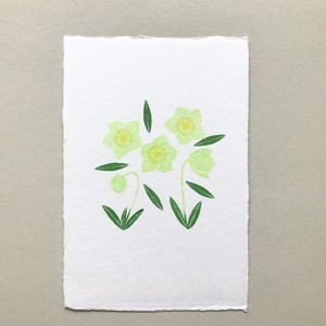 postcard (christmas  rose)
