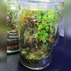 苔ボトル Kokebottle Moss bottle ライト付きセット 029