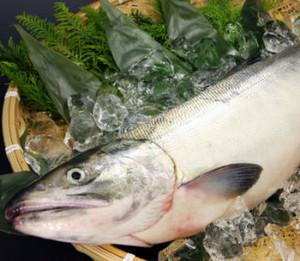 生鮭(メス・約3.0kg)