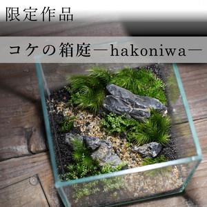 苔景−コケの箱庭 −【苔テラリウム・現物限定販売】