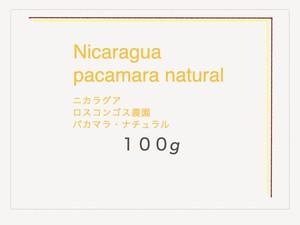 ニカラグア・ロスコンゴス農園・パカマラナチュラル [100g]