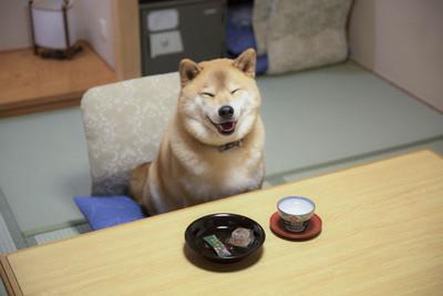 「どうもこんにちは、柴犬まる です。オンラインショップが出来ました。」