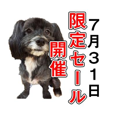 7/31はミックス犬の日🐾犬用品全品10%オフ★