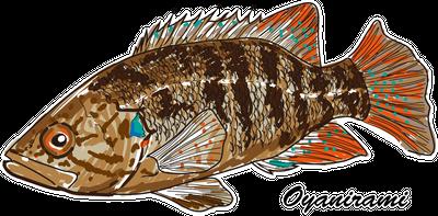 日本唯一の純淡水魚でスズキの仲間「オヤニラミ」をリアルにデザインしたTシャツ!