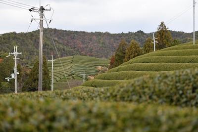 海外に日本茶を届け、日本のお茶文化や素晴らしさを広めたい。