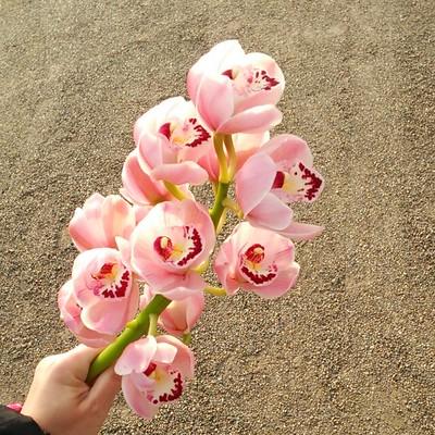 春色の花束で春をお届け♡花もちがよい『シンビジュームの切り花』
