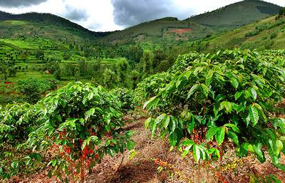 コーヒーを買ってルワンダのコーヒー農家を支援!