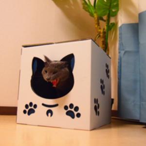 猫ちゃんが大好き♡ダンボールで作ったハウス&つめとぎ!