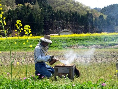 「ハチだけの仕事」を瓶詰めしています 〜非加熱はちみつ〜