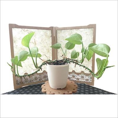 国内外から注目されている盆栽。主役を引き立てる木製屏風『ありそうでなかったカタチ』