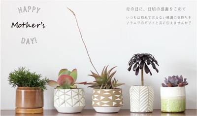 今年の母の日のギフトはちょっと変わった植物をお洒落な鉢とセットで。