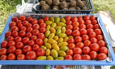 野菜は農薬を落としてから食べる。健康を守るために続けたい習慣とは。