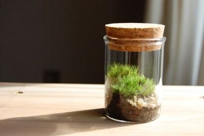 机の上に小さな緑✶苔テラリウム✶そっと眺めてみませんか?