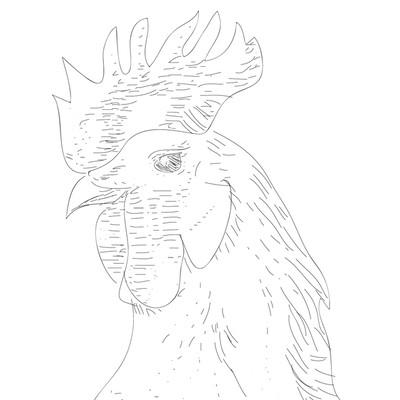 鶏のLine Art制作しました。