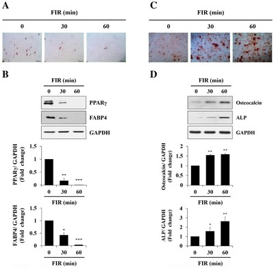 「間葉系幹細胞」と美容・健康について(その2)