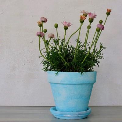 春色の植木鉢で、お部屋に花を咲かせましょう