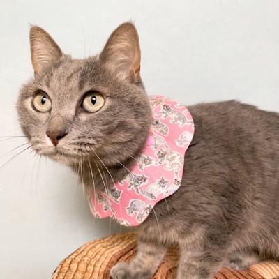 CAT BIB liberty リバティプリント生地を使用した、人気の猫用もくもくキャットスタイ!