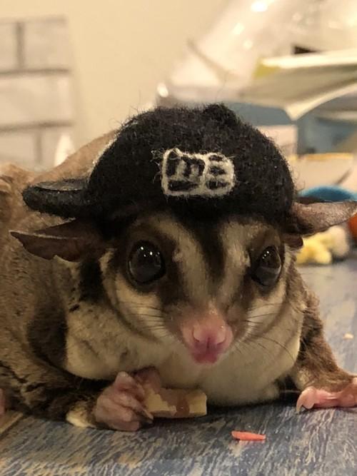 小動物用帽子【ニューエラ風】