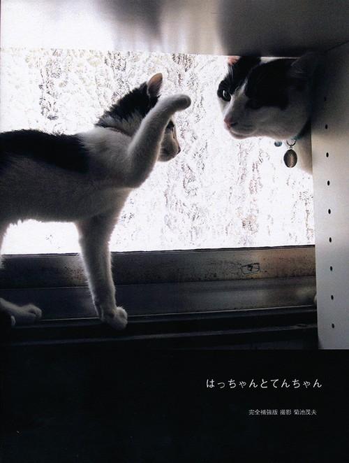 写真集「はっちゃんとてんちゃん 完全補強版」