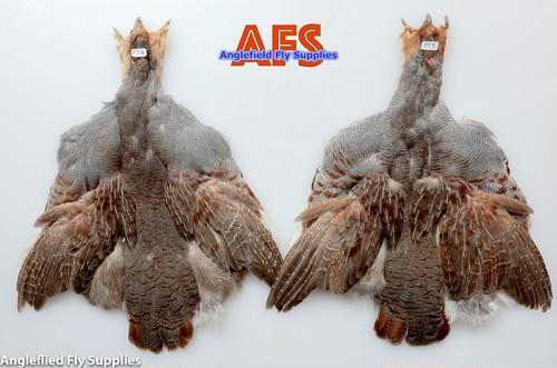 【 AFS 】Partridge COMP. Skin  #S Grade ( PT4, PT5 )