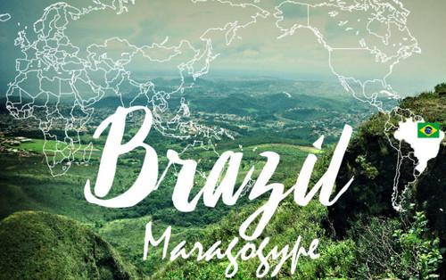 ブラジル・マラゴシッペ(新豆)