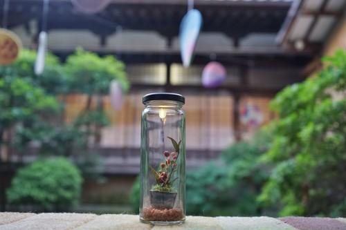 ミニチュア盆栽 ワークショップ 6/23 14:00〜