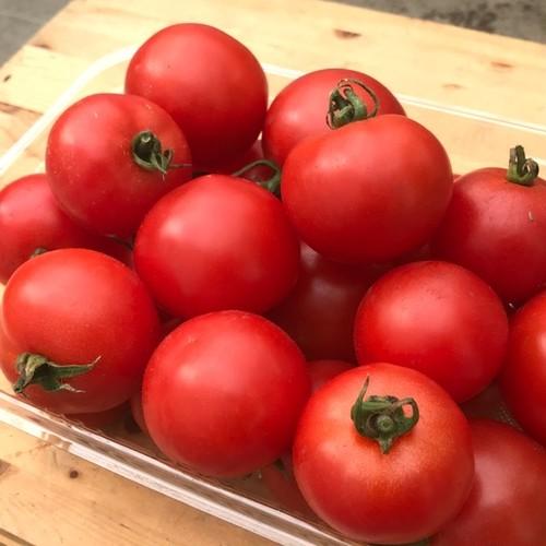 【販売終了】中玉トマト 1kg ささべじ 送料無料 有機無農薬栽培