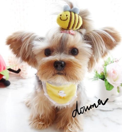 ★かわいい犬服ワンピ/ドレス  はっちピン