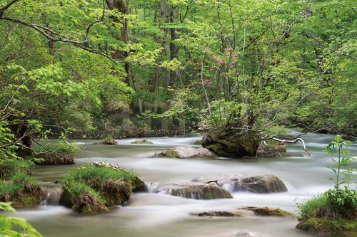 ポストカード 奥入瀬渓流 さみだれの流れ JAT007