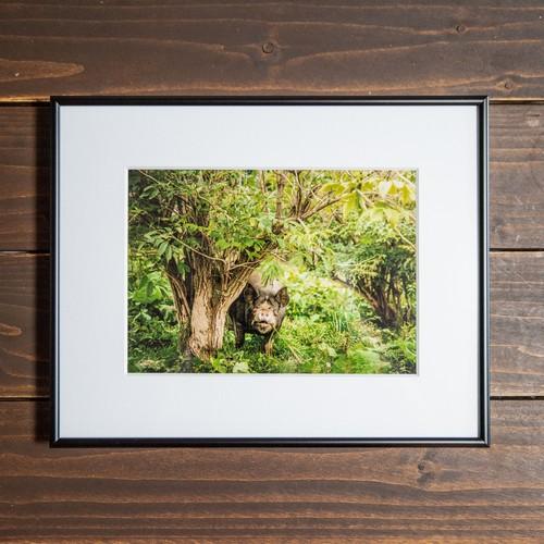 Photo Frame A3ノビ(豚)