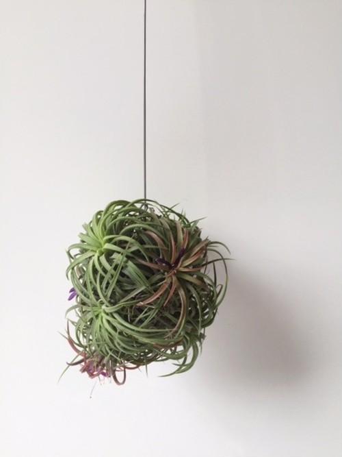 【植物】 エアープランツハンギングボール