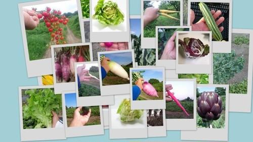 安心野菜セットA(オーガニック 有機JAS 無農薬)