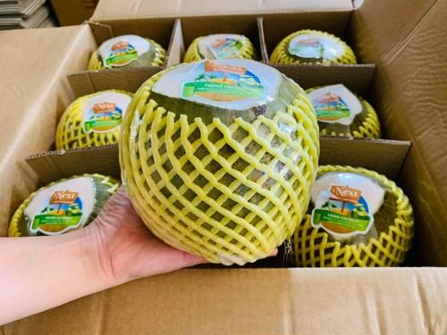 ベトナムココナッツ 2個・Young Coconut 2 個