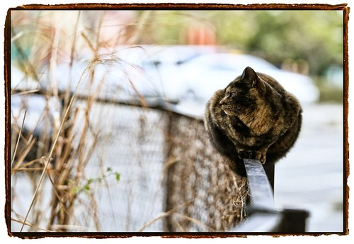 A4プリントSTREET CATS 00071