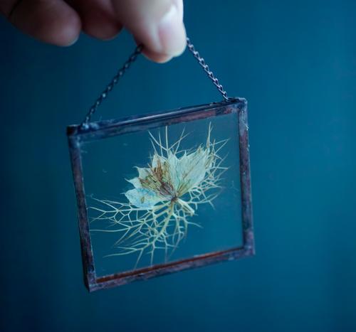 植物絵画:ドライフラワー/押し花『ニゲラ』