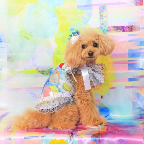jibun-fuku DOG 【チューブドレス】 DOGB2018198