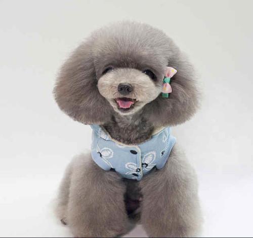 犬服 ドッグウェア 犬 ペット ペット服  ペット用品
