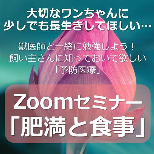 【11/12】Zoomセミナー「肥満と食事」