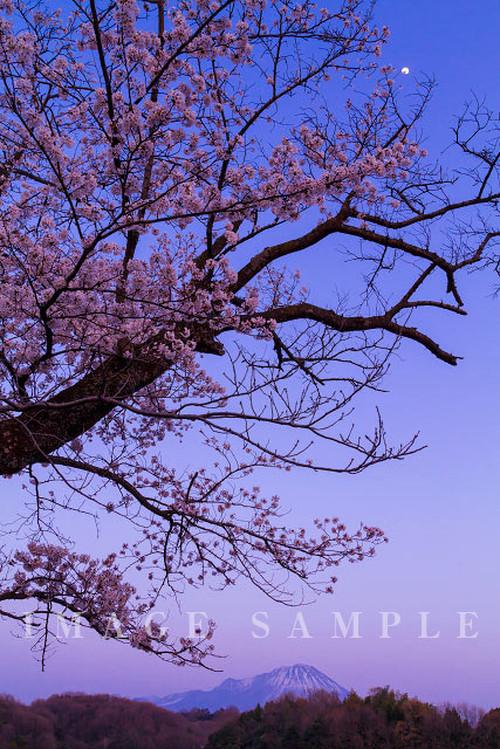 大山と桜 夜景
