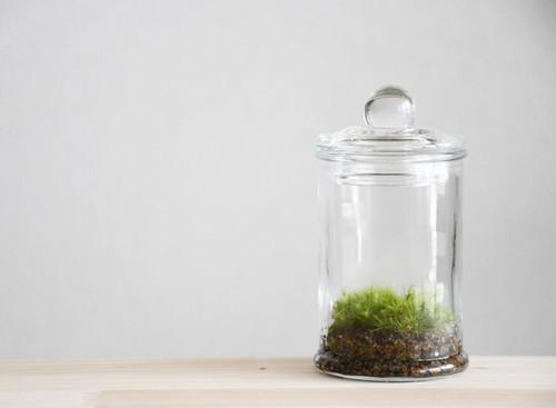 【苔テラリウム】小さな苔の森 マイクロポット タマゴケ ◆人気No. 1
