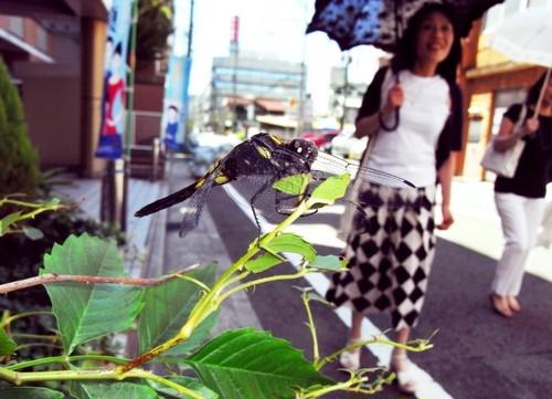 糸崎公朗『自然(=芸術)は都会の中にある:オオシオカラトンボ/和歌山市』R8391820