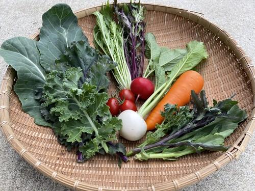 季節の野菜 お一人様セット(送料別途)