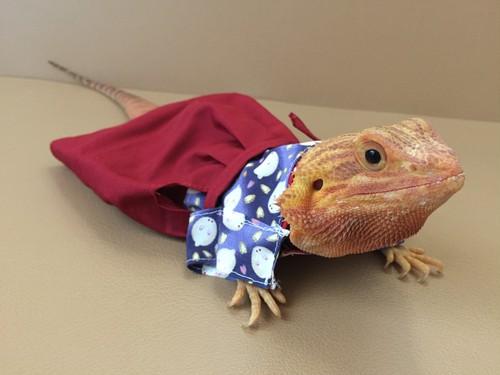 雪兎の着物、袴付き M