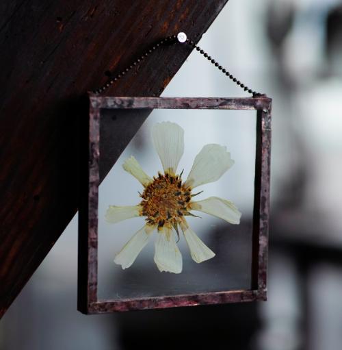 植物絵画:押し花『秋桜 白・花』